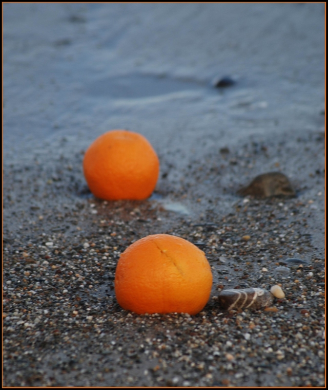 I love the fact that these, and a string of oranges had all been washed up along the shore, all in a perfect line, curving along the bay.