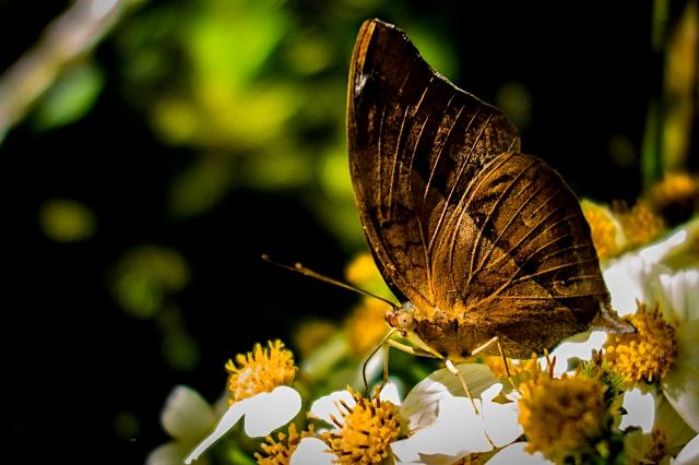Butterfly-00386
