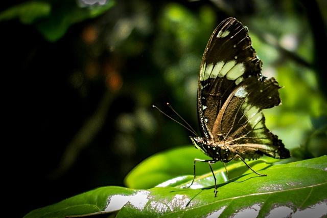 Butterfly-00400