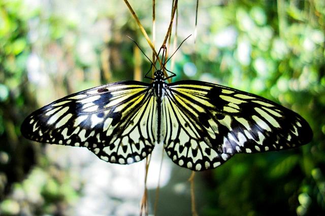 Butterfly-00402